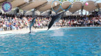Dolphin park in Kemer