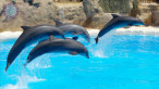 Meet With Dolphins Marmaris (Dolphin Park)