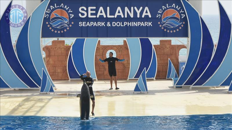 Delfinai iš arti