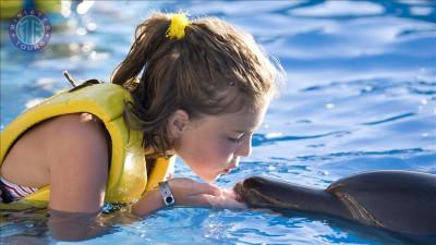 شنا با دلفین ها در سیده