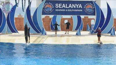 Alanya dolphin show from Evrenseki