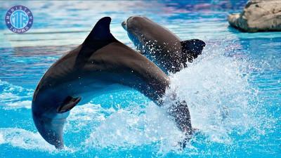 Antalya Dolphin show from Evrenseki