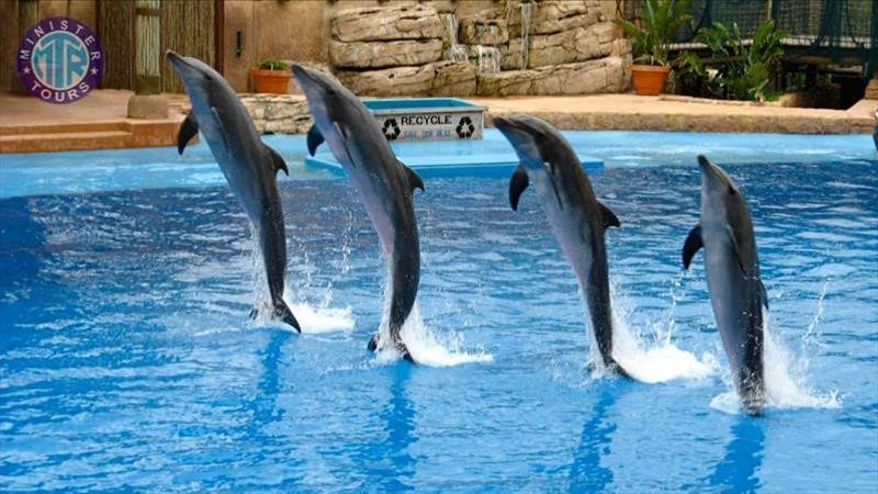 Antalya Dolphin show from Side