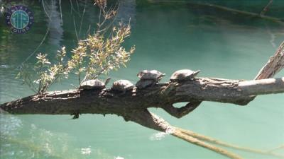 Belek'ten Manavgat Nehri Tekne Turu