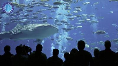 Antalya Aquarium Tünel Akvaryumu