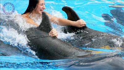 شنا با دلفین ها در کریش