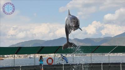 پارک دلفین ها در تورونچ