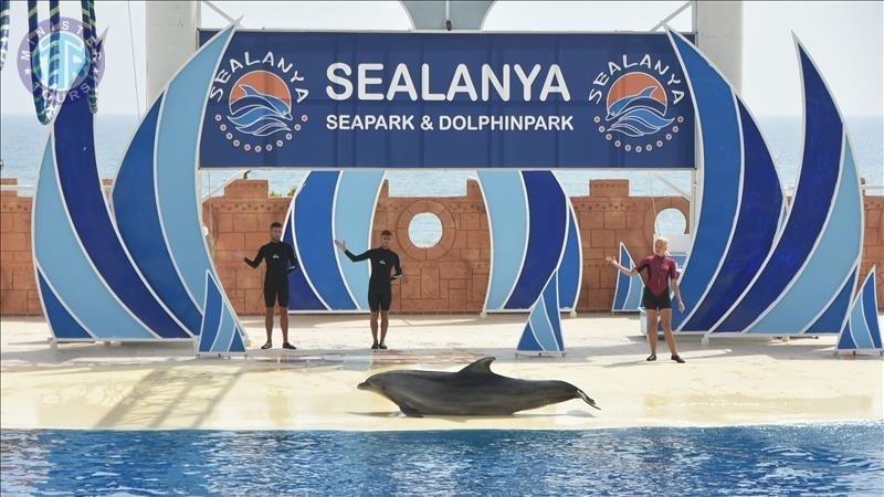 تور پارک دلفین ها در اوکورجالار