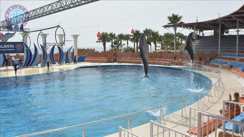 تور پارک دلفین ها در تورکلر
